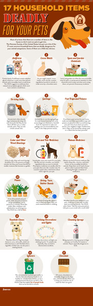 17 Household Items Deadly For Your Pets