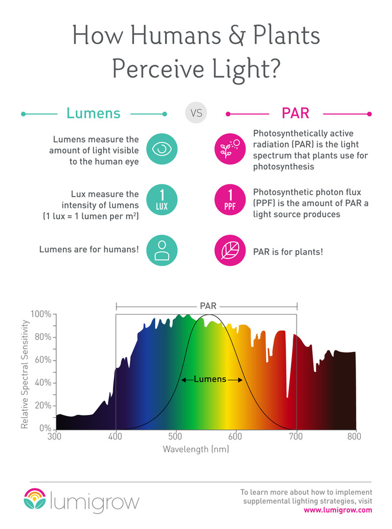How humans and plants perceive light?