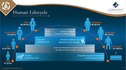 Human Life Cycle (1).JPG