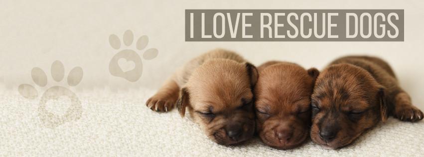 Rescue Dog Cover Photo
