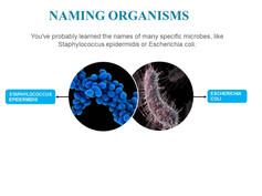 Classification of microorganisms (12).JPG