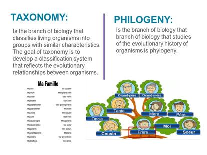 Classification of microorganisms (5).JPG