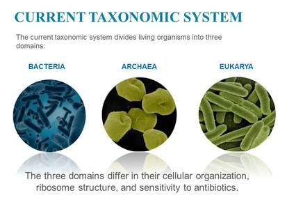 Classification of microorganisms (7).JPG