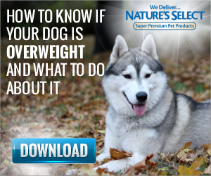 How to Know if Your Dog is Overweight