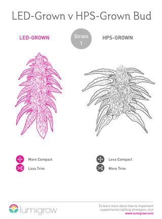 LED Grown v HPS Grown Bud