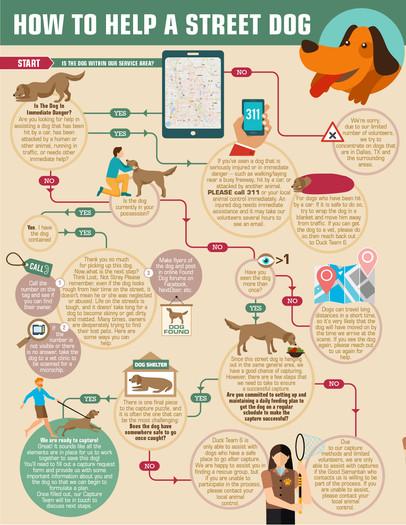 How To Help a Street Dog