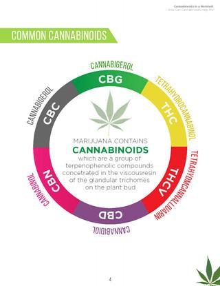 Cannabinoids in A Nutshell (6).jpg