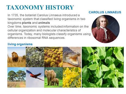 Classification of microorganisms (6).JPG