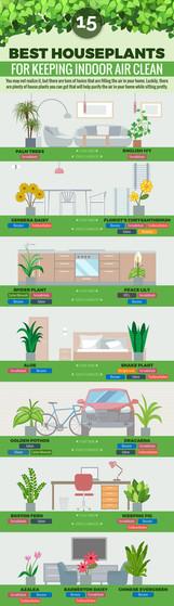 15 Best Houseplants For Keeping Indoor Air Clean