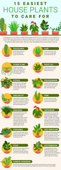 15 Easiest House Plants to Care For