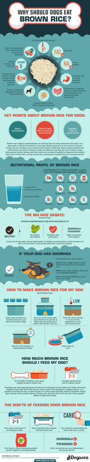 Why Should Dogs Eat Brown Rice