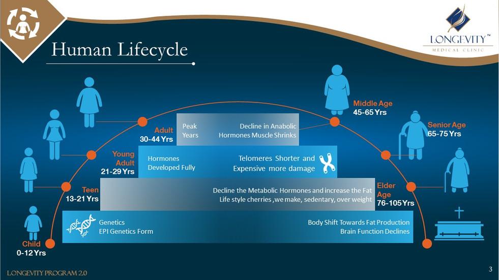 Human Life Cycle (3).JPG