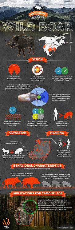 Hunting a Wild Boar Infographic