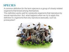 Classification of microorganisms (14).JPG