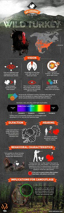 Wild Turkey Infographic