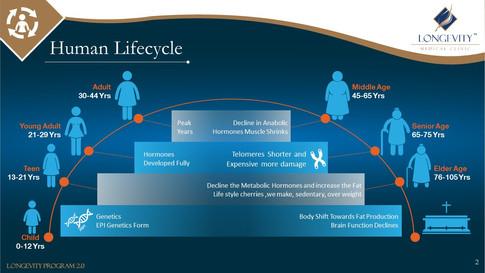 Human Life Cycle (2).JPG