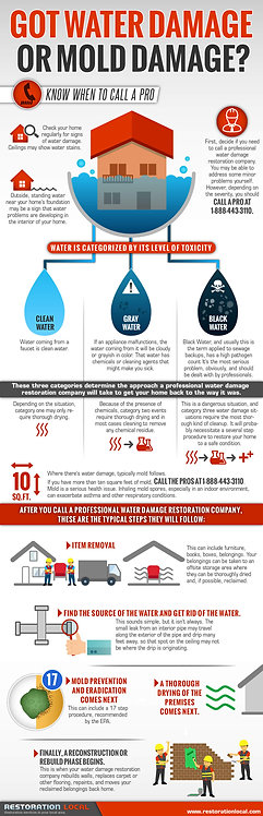 Got Water Damage or Mold Damage Infographic