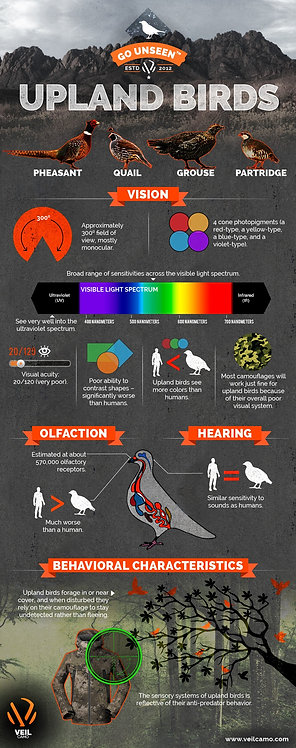 Hunting The Upland Birds (PHEASANT, QUAIL, GROUSE, PATRIDGE) Infographic