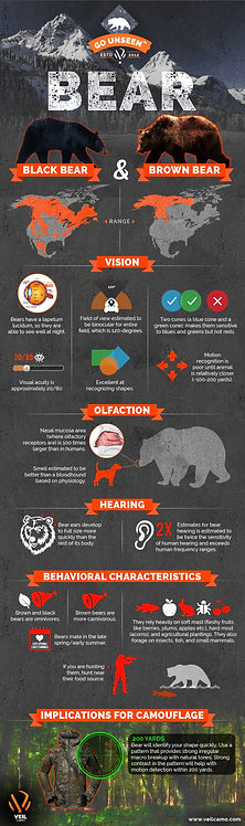 Bear (Black & Brown Bear) Infographic