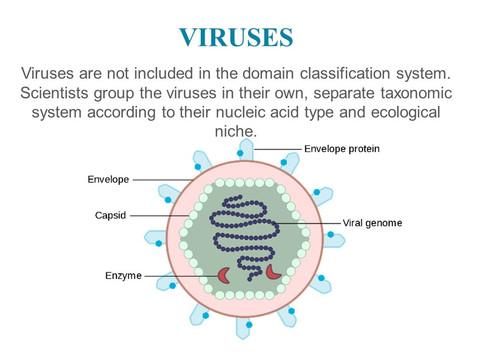 Classification of microorganisms (16).JPG