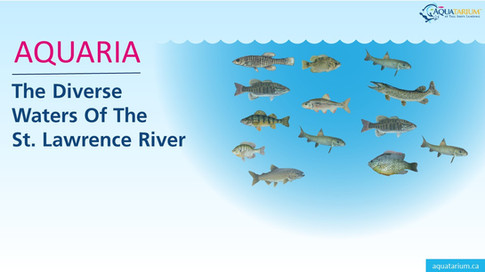 The Diverse Waters of St. Lawrence River