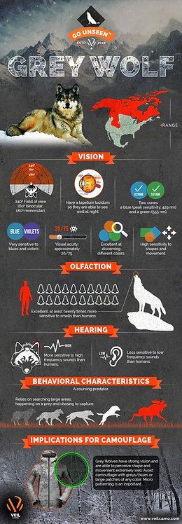 Grey Wolf Infographic