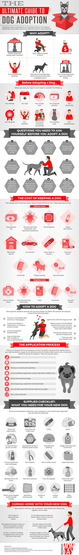 The Ultimate Guide To Dog Adoption
