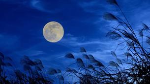 お月見をしよう