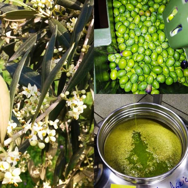 Fiori, Olive, Olio