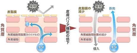 バリアが低下している皮膚の模式図