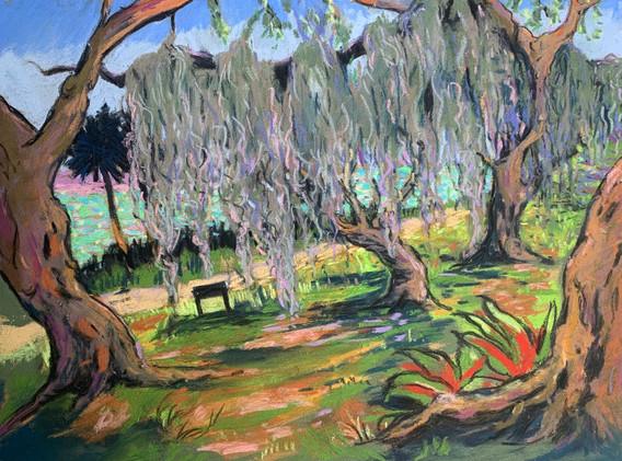 Hanging Moss at Fort Pierce Park, Pastel
