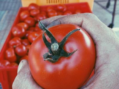 Tomato Party! (week 9)
