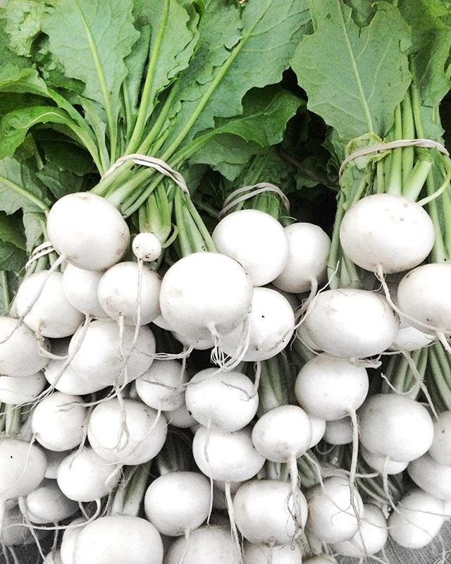 Our first ever crop of hakurei salad turnips looking beautiful at market this morning! This variety
