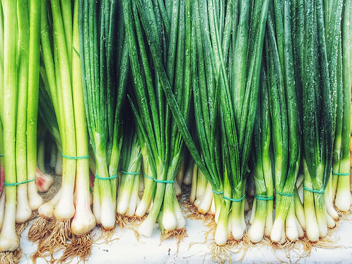 Plant- Scallions - Green Onions (6-pack)