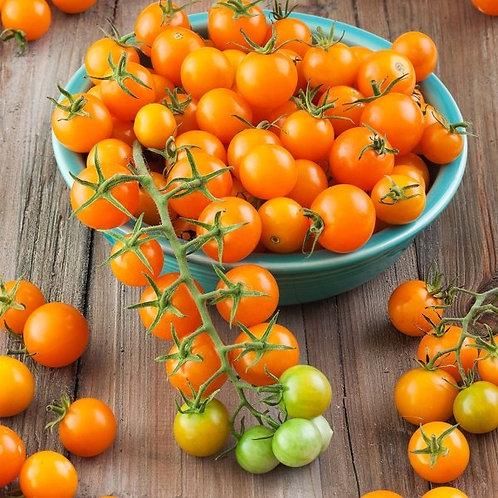 Plant- Tomato, Cherry - Sungold