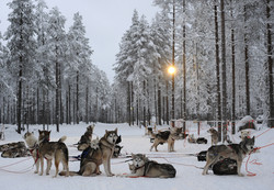 Lapland, Finland, 2008