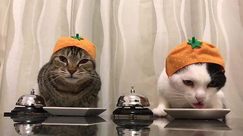 süße Kätzchen haben Hunger