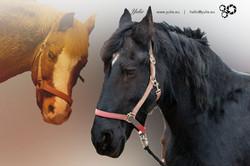 lieblingsPferde bei Yulie