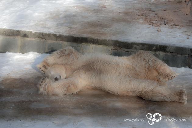 Der Zoo im Wandel der Jahreszeiten
