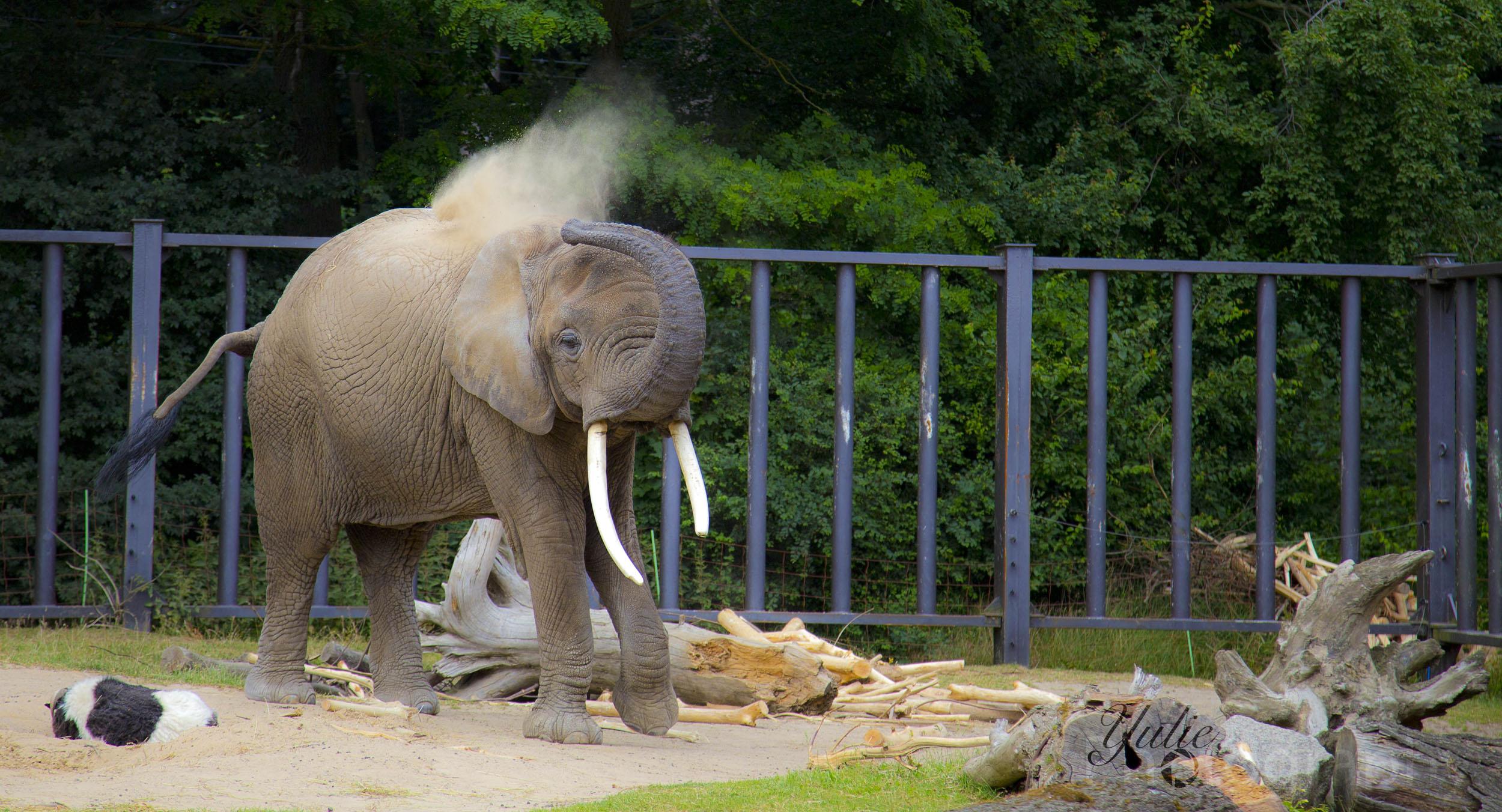 in Memoriam_Zara-Zoo Rostock