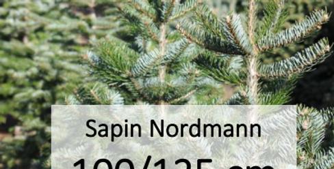 Sapin Nordmann 100/125 cm