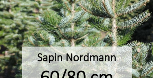 Sapin Nordmann 60/80 cm