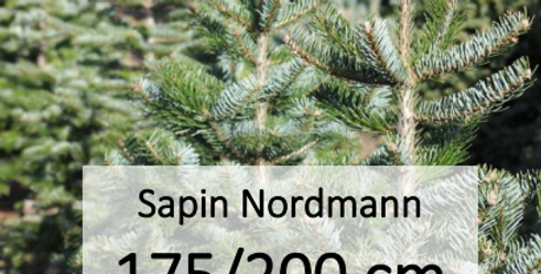 Sapin Nordmann 175/200 cm