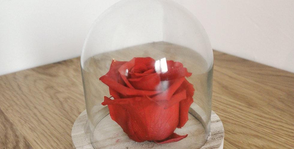 Rose rouge eternelle
