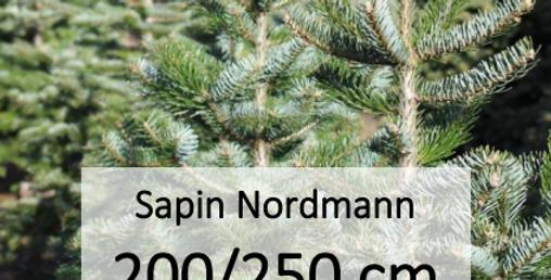 Sapin Nordmann 200/250 cm