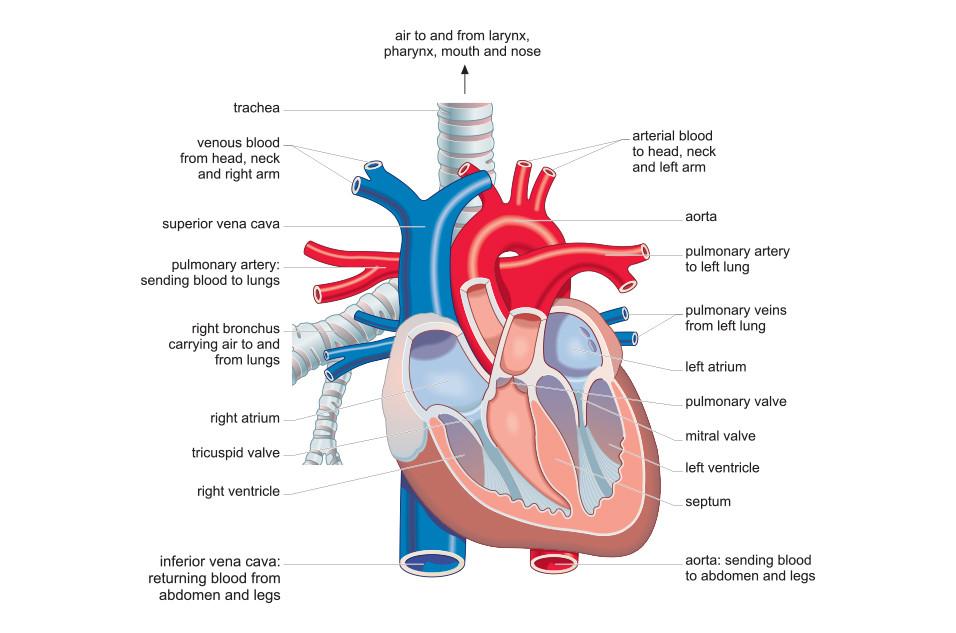 portfolio_medical01.jpg
