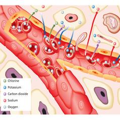 Medical and biology