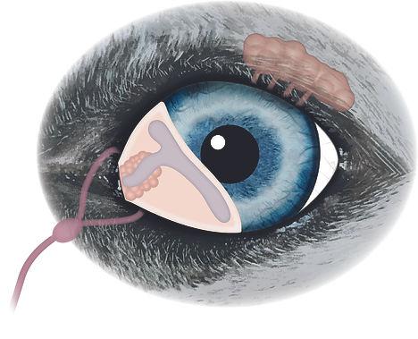 Eye lacrimal gland1.jpg