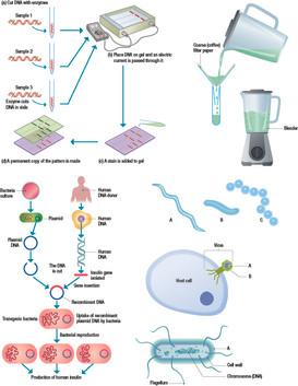 DNA03.jpg