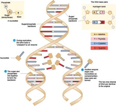DNA05.jpg
